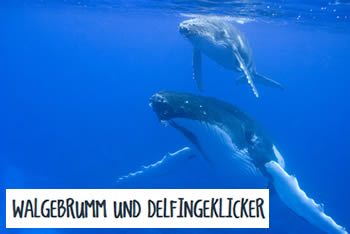 Zwei schwimmende Wale unter Wasser